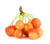 Sprig of yellow and red cherry — Stock Photo