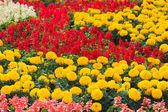 оранжевые и красные цветы на поле — Стоковое фото