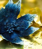 Poinsecja niebieski kwiat — Zdjęcie stockowe
