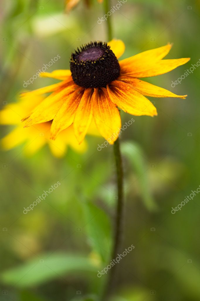 Beautiful yellow flower on field — Stock Photo #1420905