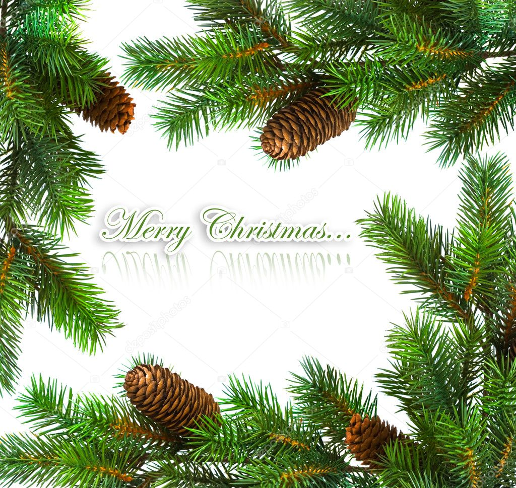 Branch of Christmas tree on white  — Stock Photo #1424136