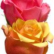 Pink and yellow roses isolated — Stock Photo #1430185