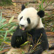 Royalty-Free Stock Photo: Giant panda, Chengdu, China