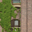 Brick wall with Europeivy — Stock Photo #1447412