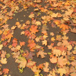 Orange leaves on earth — Stock Photo #1493389