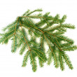 Stock Photo: Christmas tree branch