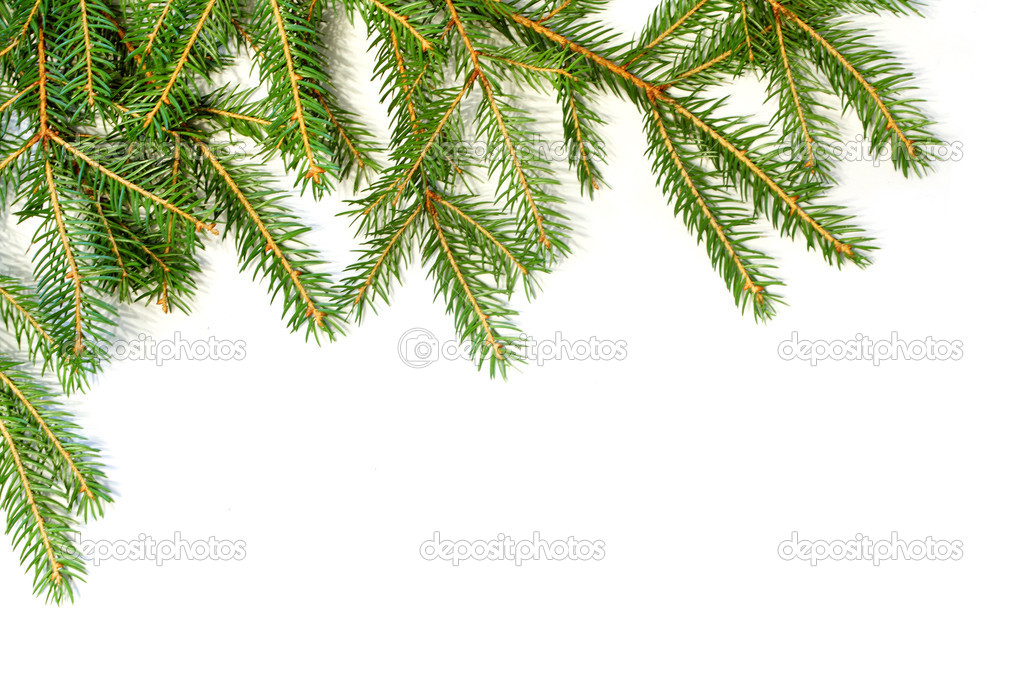 Fresh green fir branches isolated on white background — Stock Photo #1410880