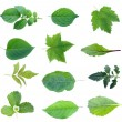 Set of green leaves - Stock Photo