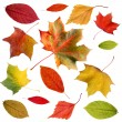 Set of colorful autumn leaves - Stok fotoğraf