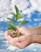 Hand with tree growing from pile of coin — Stock Photo