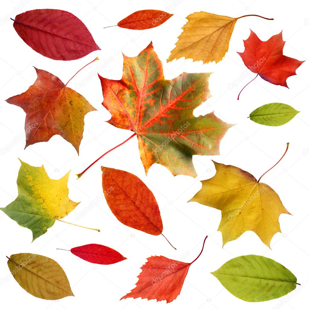 Set of colorful autumn leaves isolated on white — Stock Photo #1463672