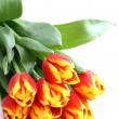 Bunch of tulips isolated on white — Stock Photo