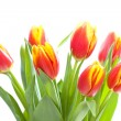 Bunch of tulips isolated on white — Stock Photo #2189056