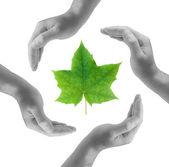 Saving nature — Stock Photo