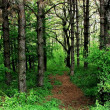 Path in the woods — Stockfoto