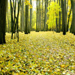 Yellow leaves in autumnal park — Stock Photo