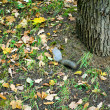 Squirrel in the forest - Stock Photo