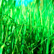Bright grass close-up - Stock Photo