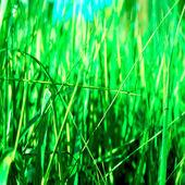 Bright grass close-up — Stock Photo