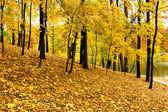 Beautiful autumnal park — Stock Photo