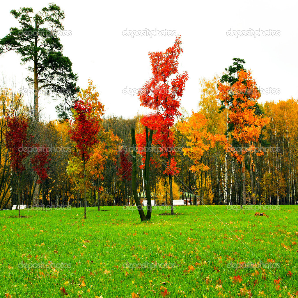 Colors of autumn park — Stock Photo #1412032