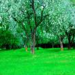 Blooming green Beautiful park garden — Stock Photo