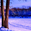 Two trees in winter — Stock Photo