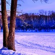 Two trees in winter — Stock Photo #1433469