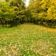 Stock Photo: Beautiful autumn park