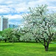 Beautiful park garden in spring — Stock Photo
