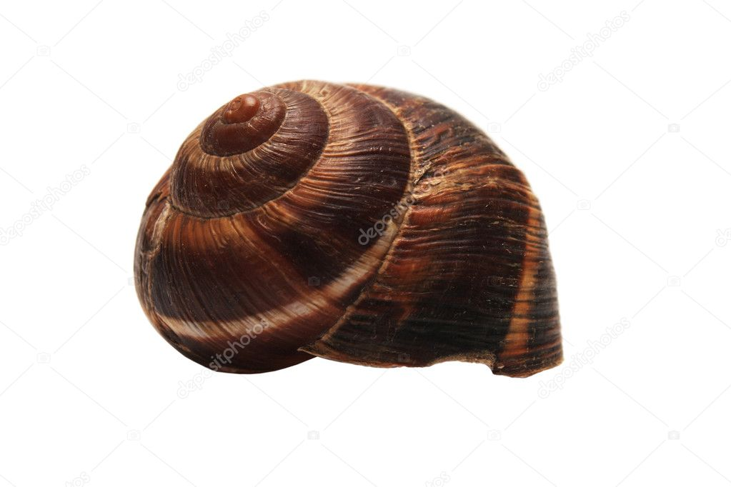Pantsir snails. Close-up. Isolated on a white background. — Stock Photo #1488971
