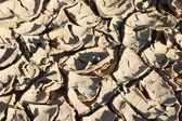 Drought. — Stock Photo