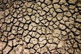 Summer Drought — Stock Photo