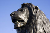 Trafalgar Lion — Stock Photo