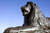 Löwe von trafalgar — Stockfoto