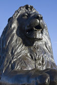 Trafalgar lion front on — Stock Photo