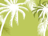 Palm boom illustratie — Stockvector