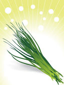 Bunch of chives illustration — Stock Vector