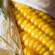 Macro of maize — Stock Photo