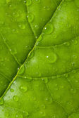 Leaf with water drops — Stock Photo