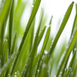 Fresh grass with dew — Stock Photo