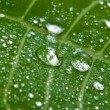 Stock Photo: Macro of wet leaf