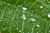 Macro of wet leaf — Stock Photo