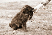Eenzame dakloze hond en menselijke hand — Stockfoto