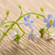 Stock Photo: Forget me not flower over recycled paper