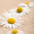 Camomile flower over recycled paper — Stock Photo
