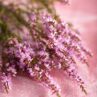 Stock Photo: Bouquet of heather flowers over pink