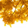 Frame of autumn leaves isolated — Stock Photo