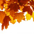 Beautiful autumn leaves isolated — Stock Photo