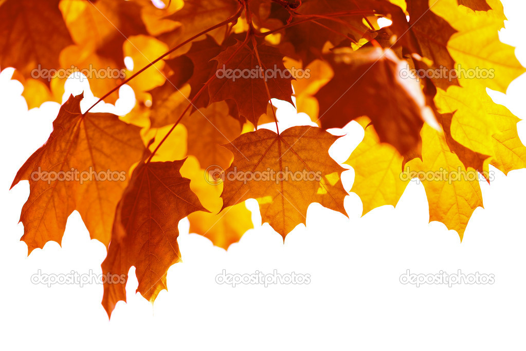 Beautiful autumn leaves isolated — Stock Photo #1707399